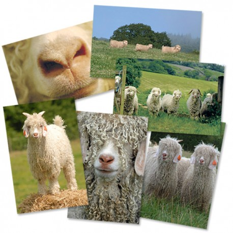 Corrymoor Mohair Postcards