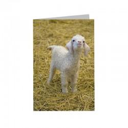 Corrymoor Angora Goats Greeting Card