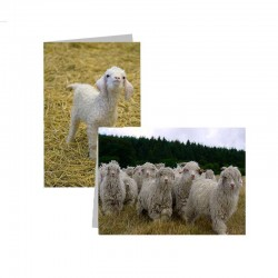 Corrymoor Angora Goats Greeting Card